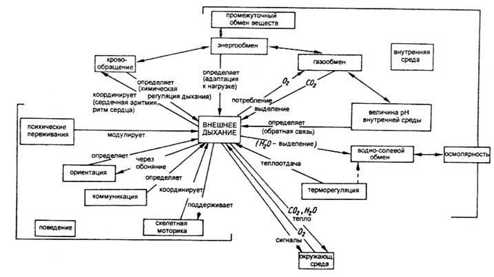 Схема взаимосвязи органов и систем органов животных схема